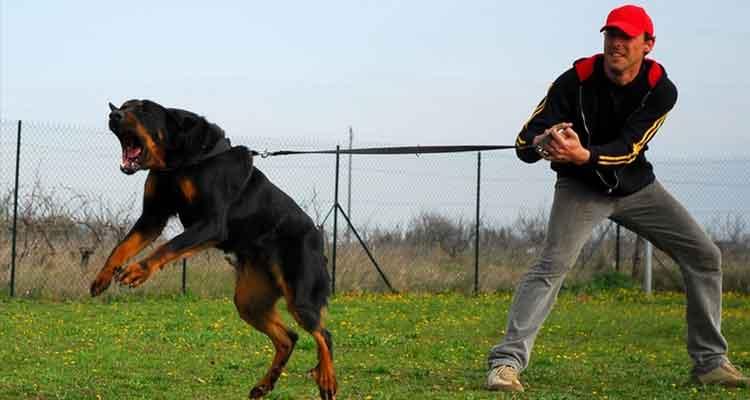 dressage canin avec europe centre canin rouen 76 et dans l 39 eure. Black Bedroom Furniture Sets. Home Design Ideas