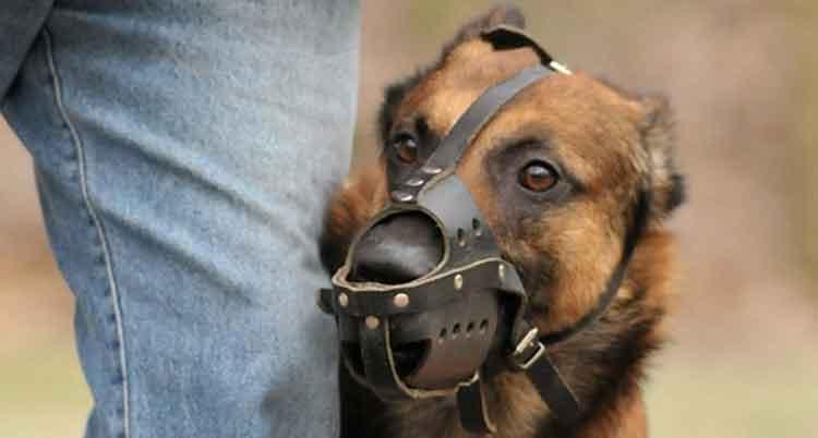 Dressage canin avec Europe Centre Canin à Rouen (76) et