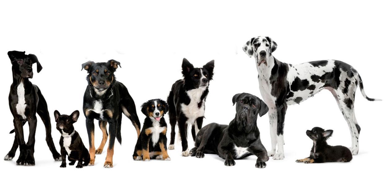 centre-canin
